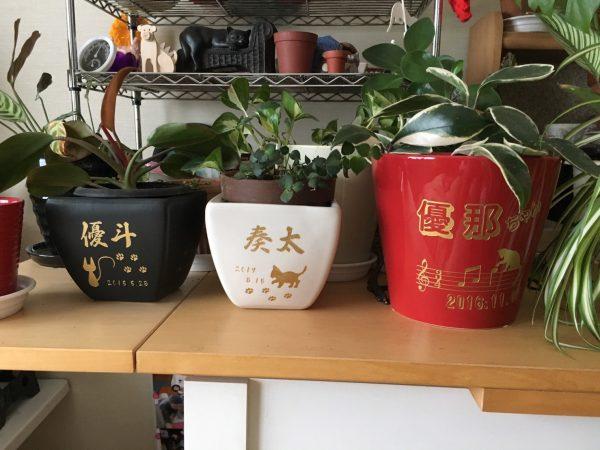 鉢植え彫刻