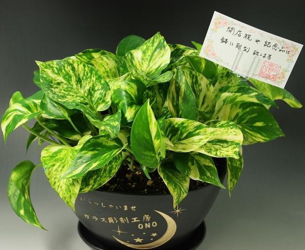 開店祝い・新築祝いに名入れの観葉植物
