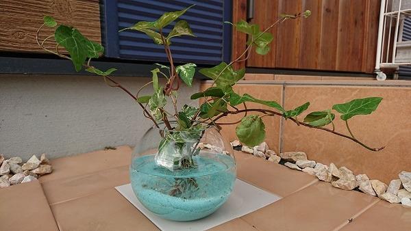 【夏に涼しげ♪】金魚鉢風のガラスフラワーベース