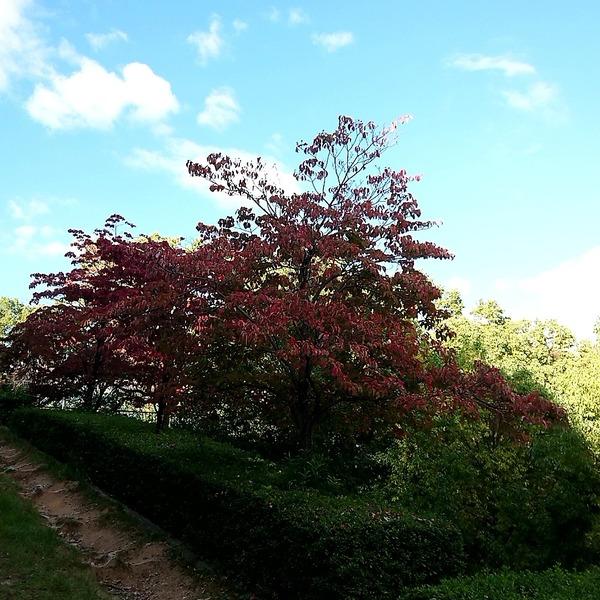 秋の紅葉はじめ