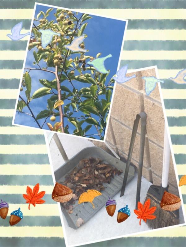 庭の落ち葉を掃除