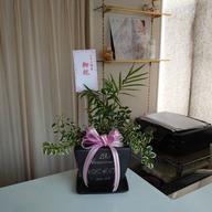 鉢植え&観葉植物