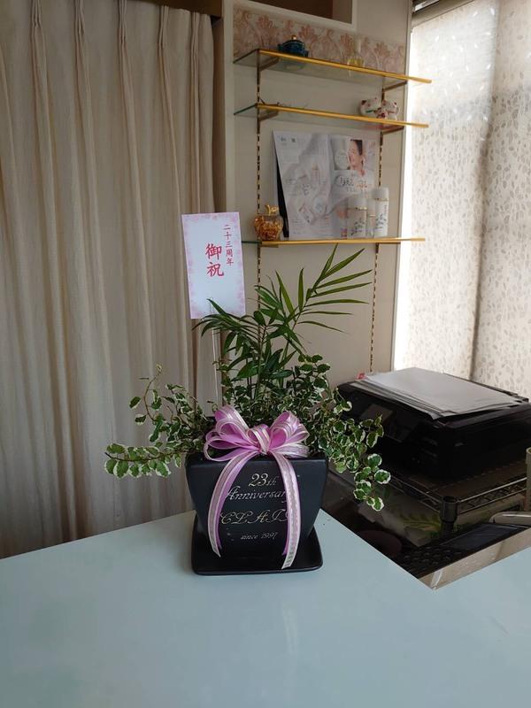 鉢植え&観葉植物のサムネイル