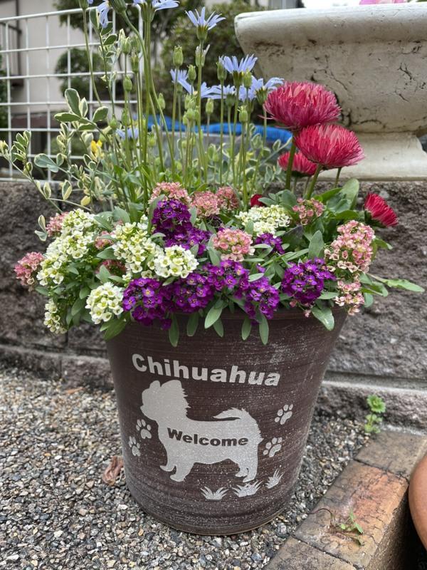 鉢植えに可愛い彫刻を♪のサムネイル